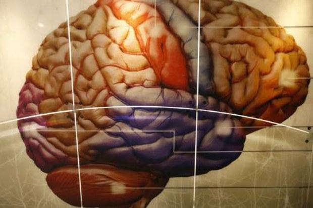 cerebro impulsi