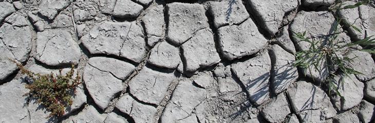 5-trockenere-lackenboden